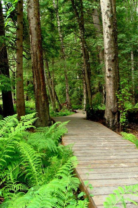 Howe-Creek-Trail-Terrace
