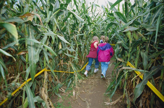 corn-maze-cover