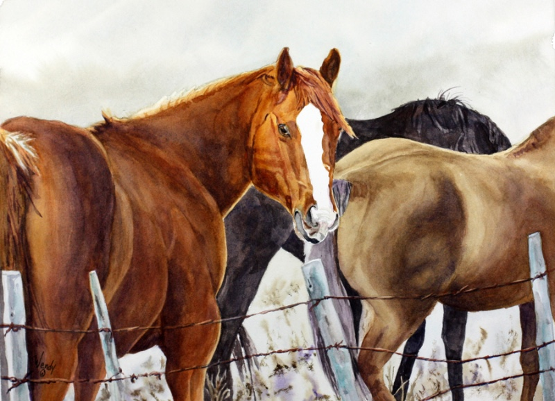 Wendy-Mould.-Pick-of-the-Herd.-Watercolour-5