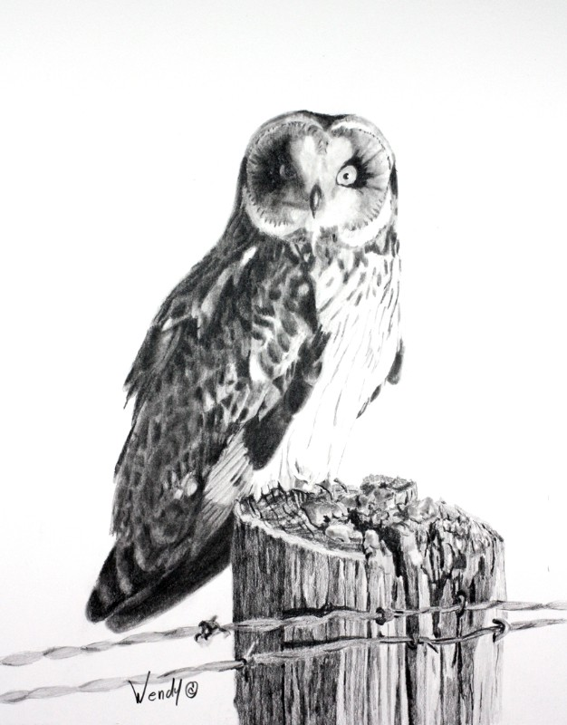Wendy-Mould.-Short-Eared-Owl.-On-the-Prowl.-Graphite