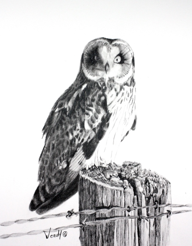 Wendy-Mould.-Short-Eared-Owl.-On-the-Prowl.-Graphite-1