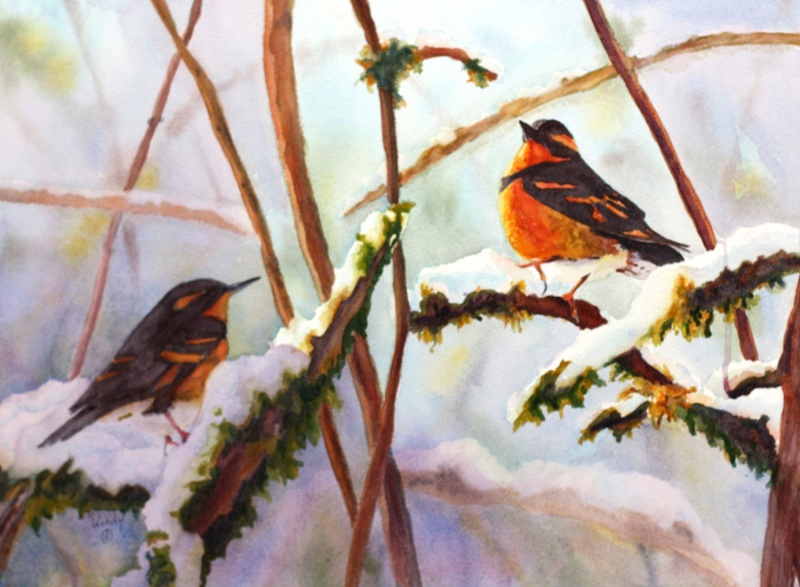 Wendy-Mould.-Varied-Thrush.-Signs-of-Spring.-Watercolour