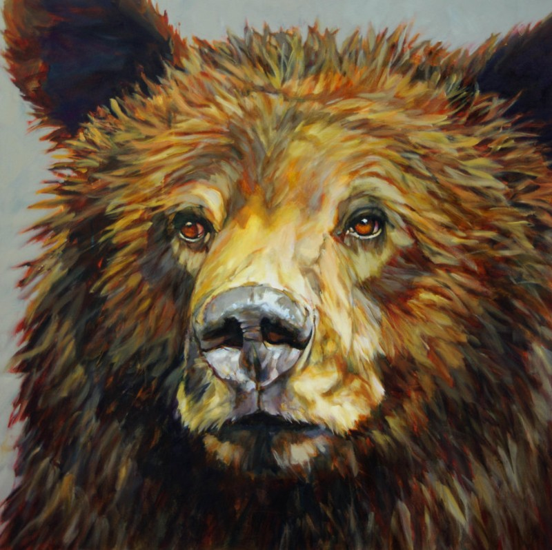 500grizzly_stare_48x48
