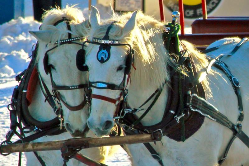 horse-drawn-sleigh-ride